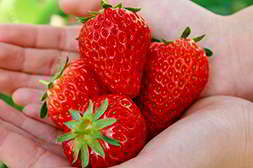 Чудо ягодница укрепляет рост растений