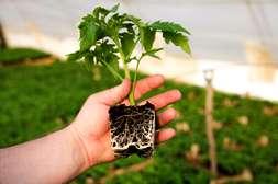 Флоравит обеспечивает развитие мощной корневой системы.
