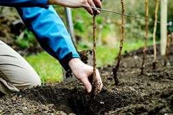 Состав Гидрактива Плюс подходит всем растениям.