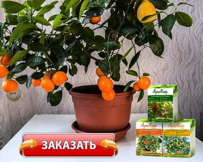 Мини деревья Agronova купить по доступной цене.